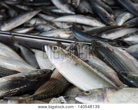 Closeup of fresh fish sea food in local market Thailand