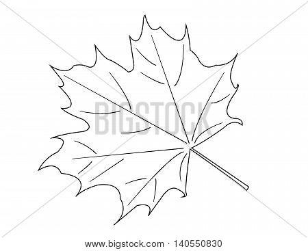 white Maple Leaf on white background. vector