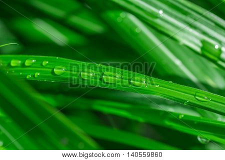 Rain or dew drops on green grass shining bright in the sun close up macro vivid green colors.