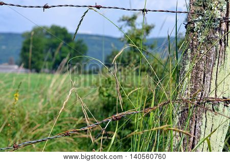 view through barbwire at meadow in summertime