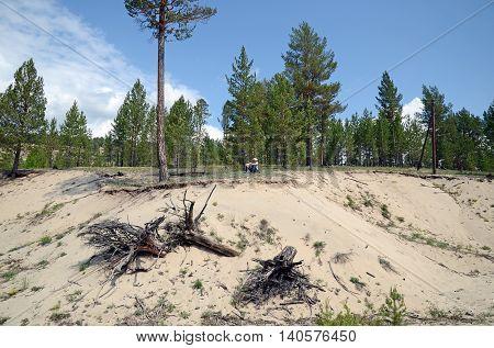 Sandy soil in Nilova Pustyn resort area. Spurs of the East Sayan Buryatia