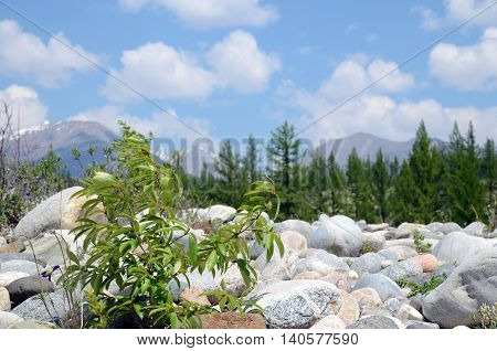 Rocky shore of Irkut River in its beginning. Tunkinskaya valley Buryatia