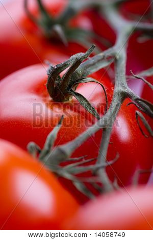 Closeup Of Red Tomatoes