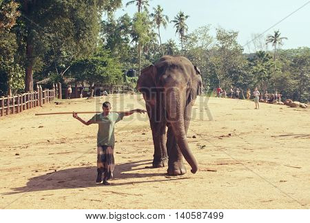Pinnawala, Sri Lanka, october 21, 2011: Pinnawala Elephant Orphanage. Man is an elephant, a close friend of the mighty animal and human. The elephant in the nursery.