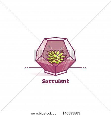 Vector color flat illustration sukkulenten in terrarium