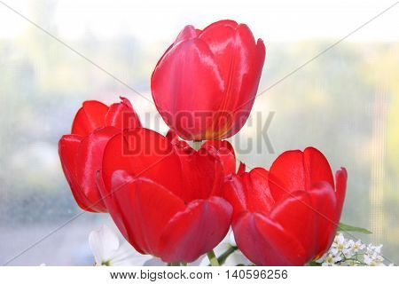 Red tulips in a vase on the windowsill