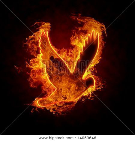Flying burning bird silhouette on black background poster