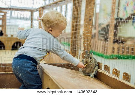 Girl Play With The Rabbits
