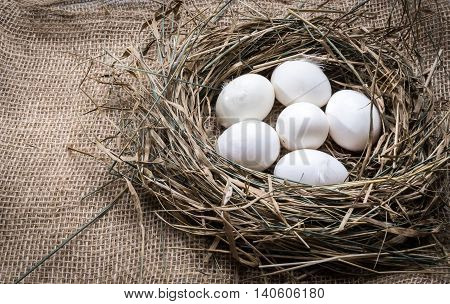White chicken eggs in straw nest. Hen eggs in hay on sackcloth background