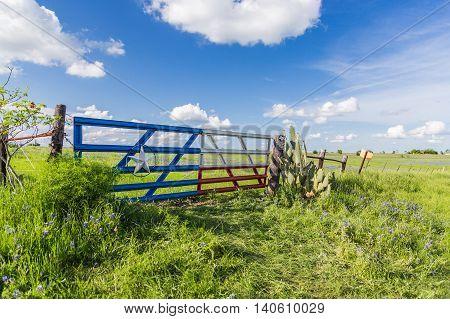 Bluebonnet Field In Countryside  Of Ennis, Texas.