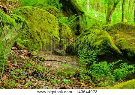 Ferns grow around moss-covered boulders at the foot of rock ledges in early spring