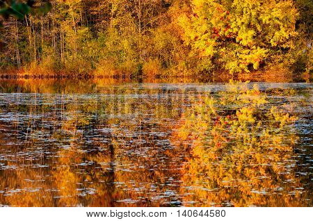 Lonesome Pond one of several in Tinkers Creek State Nature Preserve wakes up at sunrise reflecting the trees on the far shore poster