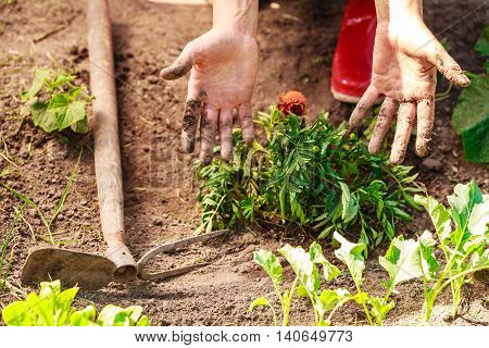 Woman Gardener Replanting Flowers