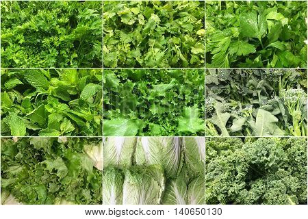 collage of many kind of green vegetables background