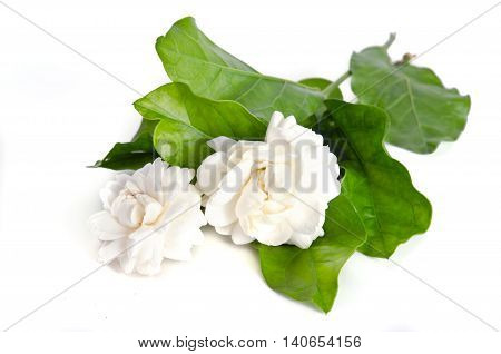 Flower Background Of Jasmine Flowers Isolated On White Background