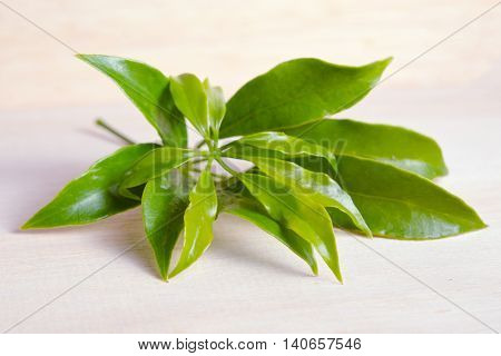 Araliaceae Leaf Isolated On Wooden Board
