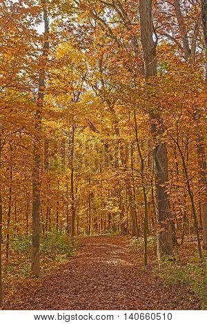Quiet Trail in the Fall in the Morton Arboretum in Lisle Illinois