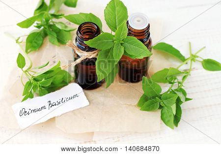 Essential basil aroma oil. Fresh green sprigs of culinary and medicinal herb basil, apothecary tincture bottles, paper label. Text Ocimim Basilicum.