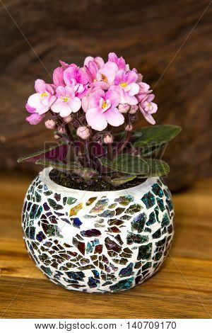 A Small, Pink Viola Plant In A Colorfull Glas Pot.