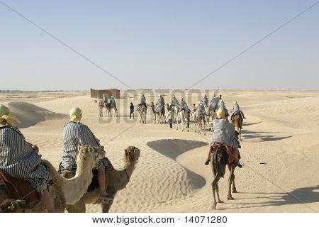 Tourists Riding Camels In Sahara Desert