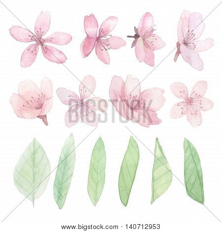 Set of flowers leaves and branches traditional drawing and painting by water-colour on white background