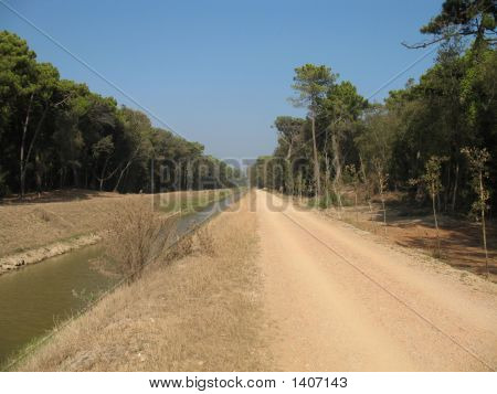 Path in the forest where Serchio river goes in the sea poster