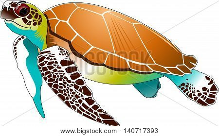 big beautiful sea turtle swimming in the sea vector