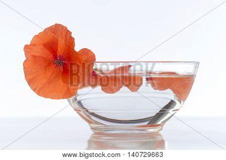 Poppy in glass cup herbal tea preparation