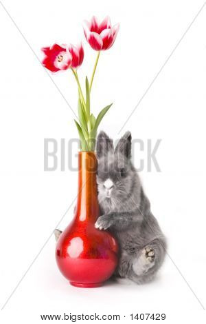 Baby Bunny With Tulips