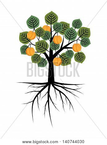 Apricot tree with fruits and roots illustration