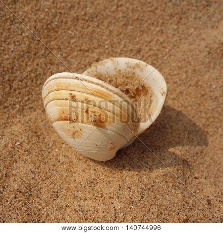 Close-up  of a bivalve seashell on a beach