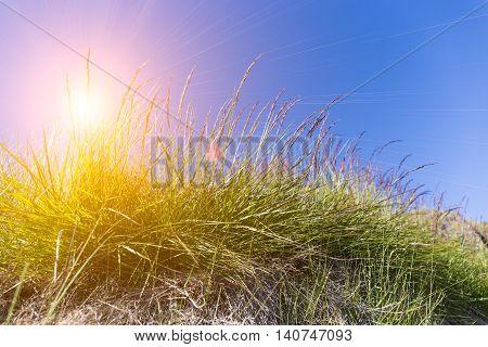 green grass flower with blue sky and sun beam light.