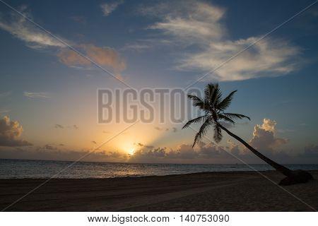 Tropical Sunrise at a beach with palm