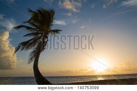 Tropical Sunrise at a beach with palms
