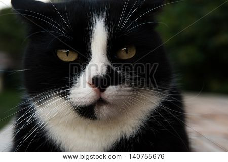 Black And White Cat Walking In The Street