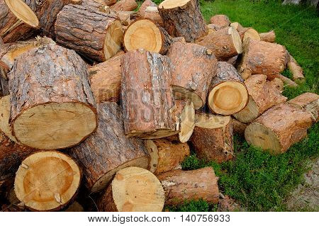 Pile of pine chocks on the ground grass