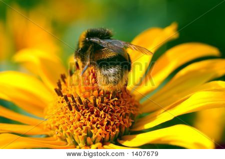 Bee On The Yellow Flower