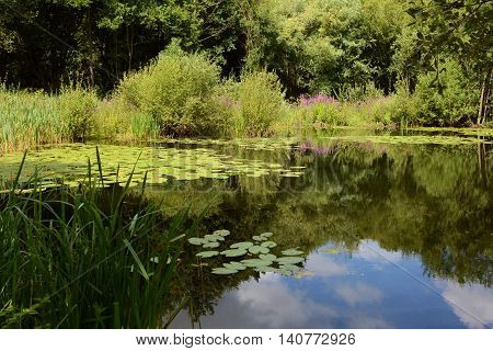 Lily Pond Surrounded By Lush Plants
