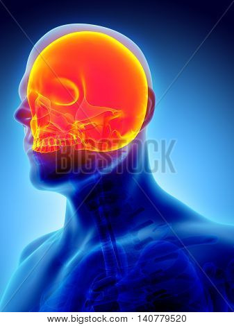 3D Illustration Of Cranium, Medical Concept.