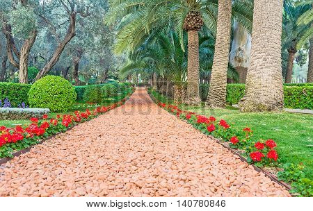 The footpath is bordered with red begonia flowers Bahai Gardens Haifa Israel.