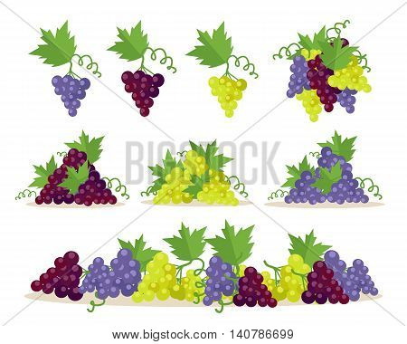 Collection of different grapes sorts. Fruit for preparation check elite vintage strong wine. Bunch or cluster of grapes. Grapery racemation. Part of series of viniculture production items. Vector