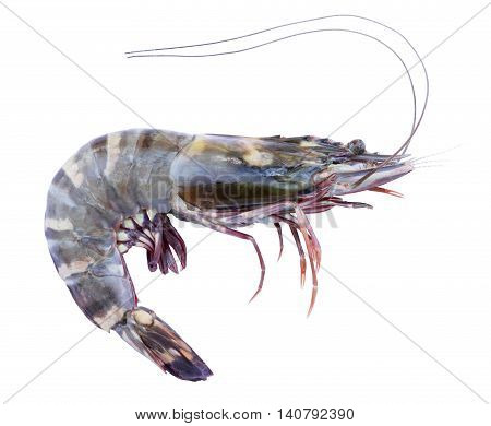 Black tiger prawn isolated on white background