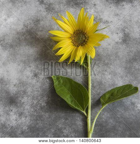 Yellow flower on dark background - condolence card