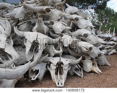 Steer Skulls - Piled High in the Old West