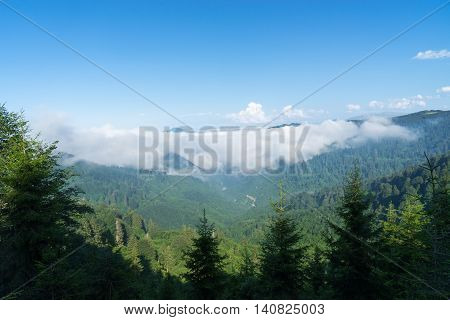 Summer Mountain View To Highland And Pine Tree Forest