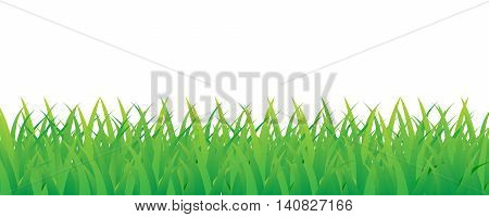 beautiful green grass vector for nature background