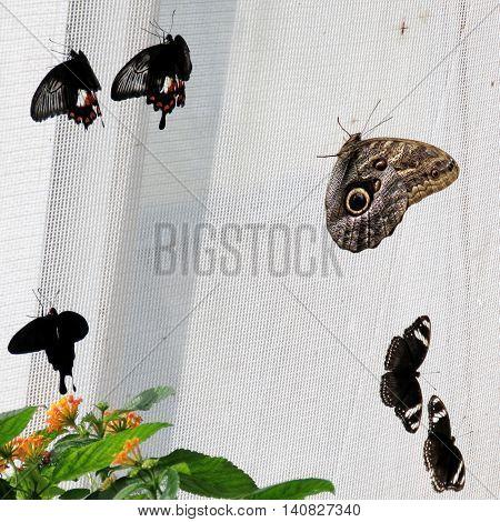 Butterflies on a grid in garden of Niagara Falls Canada July 16 2016