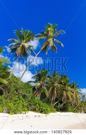 Tranquility Jungle Sea
