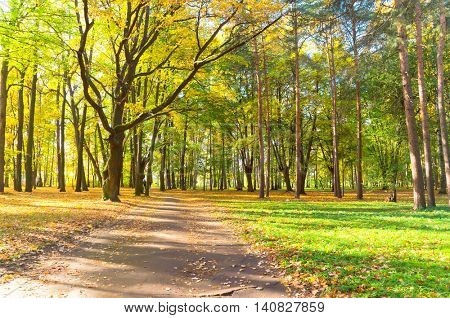 Sunlit Foliage Foliage Beauty