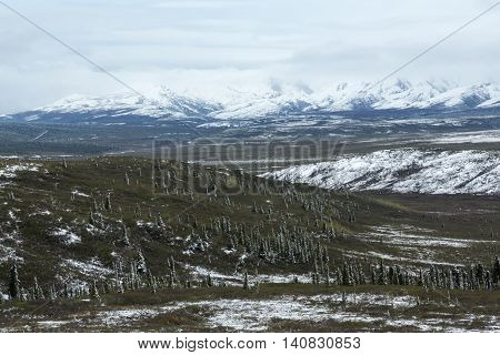 Fresh snow dusts the landscape of Alaska's Denali National Park